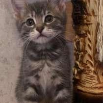 Котёнок в добрые руки, в Ставрополе