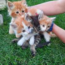 Балдежные котята в добрые руки, в г.Брест