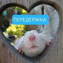 Передержка грызунов, черепах, в Москве