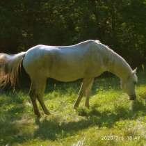 Продам коня, в г.Украинка