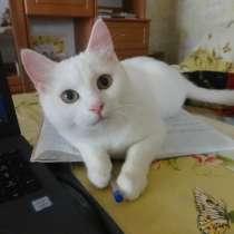 Белая кошечка као мани с документами, в г.Мариуполь