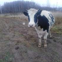 Корова, в Наро-Фоминске