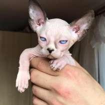 我会卖一只独家品种的猫, в г.Харьков