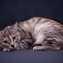 Кошечка Кайли ищет дом, в Москве