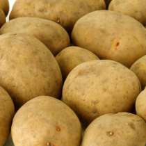 Картофель семенной в Ставрополь, в г.Гродно