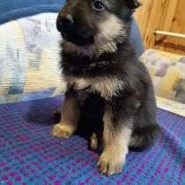 Продам щенков, в г.Украинка