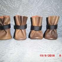 Для маленькой собачки обувь, в Добрянке