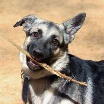 Марти, маленький веселый щеночек, метис ВЕО в дар, в Москве