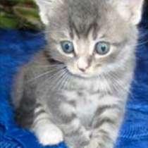 Подарим котёнка, в Переславле-Залесском
