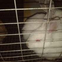Кролики, в г.Макеевка