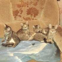 Котята в добрые руки, в Ульяновске