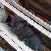 Отдам котят, в г.Николаев