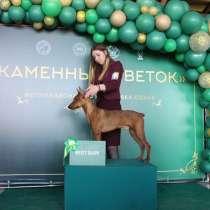 Подготовка собак к выставкам(хендлер), в Екатеринбурге
