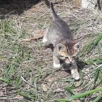 Котёнок-мышелов, в Новомосковске