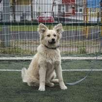 Необыкновенно красивая молоденькая собачка, в Санкт-Петербурге