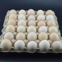 Линия по производству упаковки для яиц, в г.Харбин