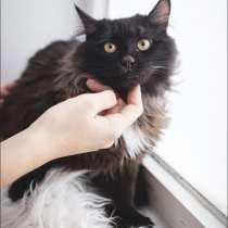 Котик Веня ищет дом, в Москве
