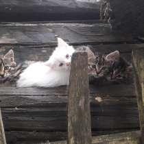 Котята бесплатно в добрые руки, в г.Могилёв