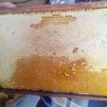 Мед в сотах на корпусной рамке, в Оренбурге