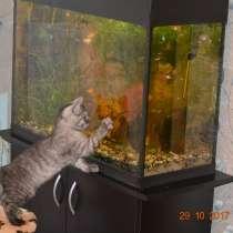 Продам рыбок, в Иванове