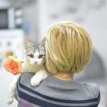 Замурчательный и ласковый кот Димочка, в Москве