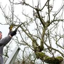 Как получить разрешение на обрезку деревьев в Жуковском, в Жуковском