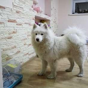 Гостиница для собак (зоогостиница, передержка) happydogs. kz, в г.Алматы