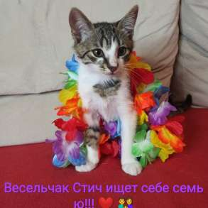 Котята в дар Стич и Гарри ищут дом:), в г.Минск