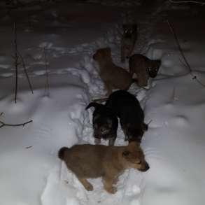 Пристраиваются щенки. спасаем, в Екатеринбурге