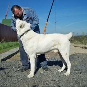 Дрессировка собак у зоопсихолога, в Москве