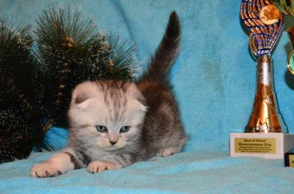 Породистые котята в Кисловодске фото 8