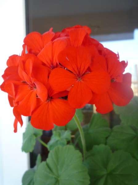 Рапродажа комнатных растений