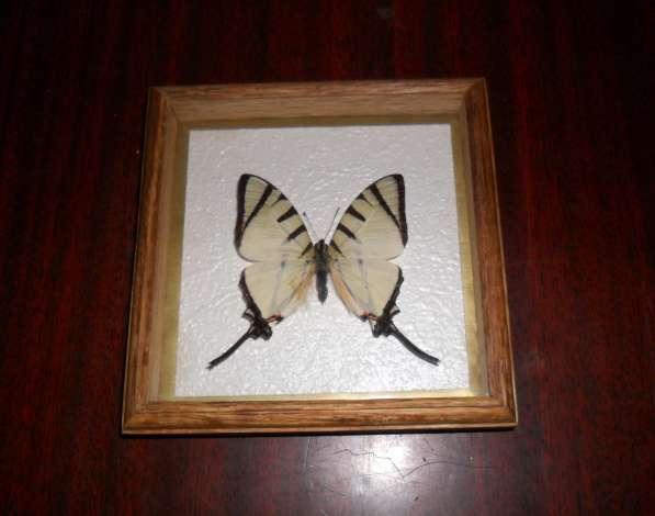 Тропические бабочки в рамках