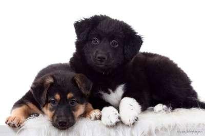 Отдам даром Пушистые и очень хорошенькие щенки 2 мес