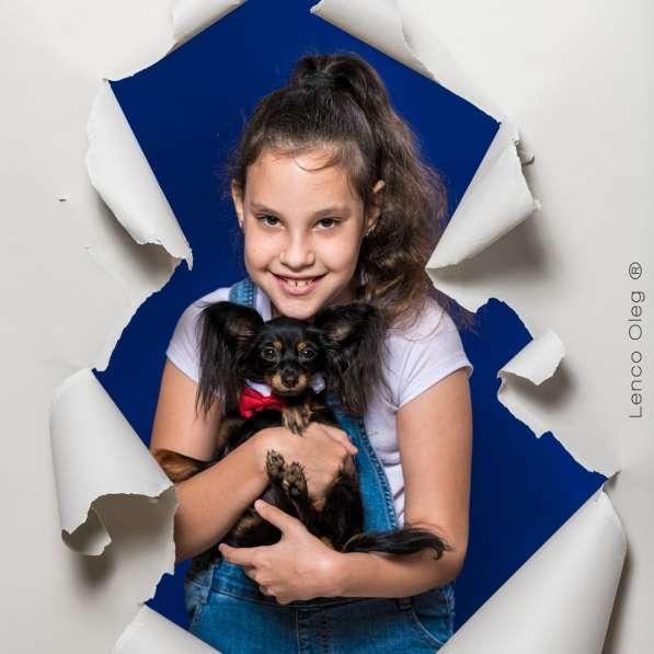 Русский той терьер щенки израиль питомник в фото 10