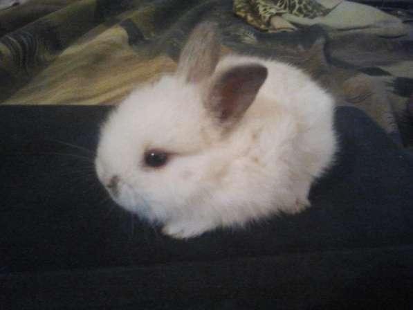 Альтернатива кошке-очаровательные декоративные крольчата