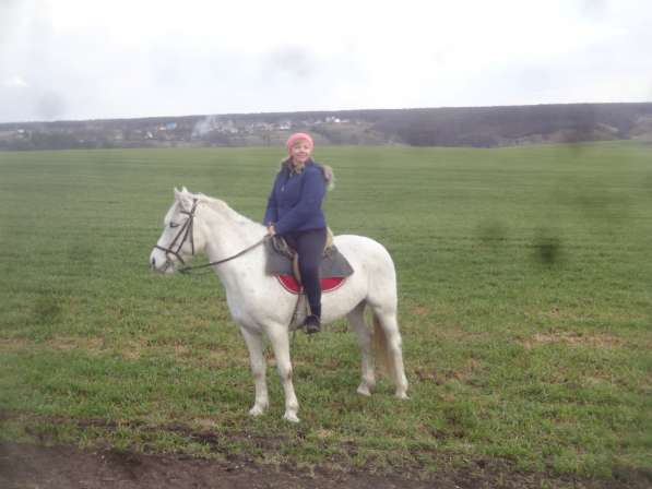 Прогулки на лошадях в Воронеже фото 4