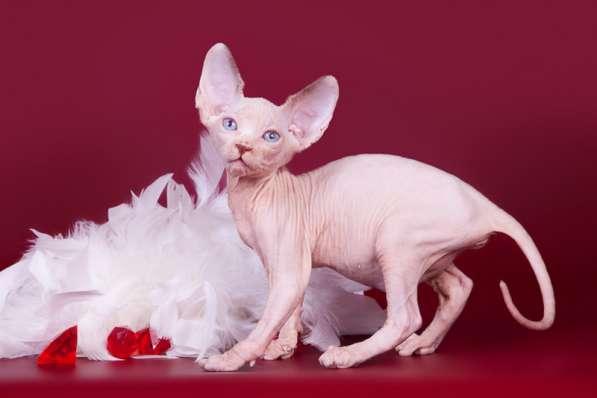 Бархатный котёнок с чувственной душой. в фото 5