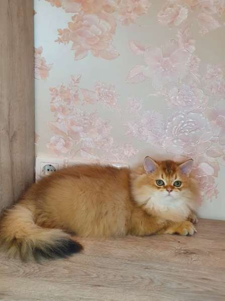 Kitten is looking for a new family в