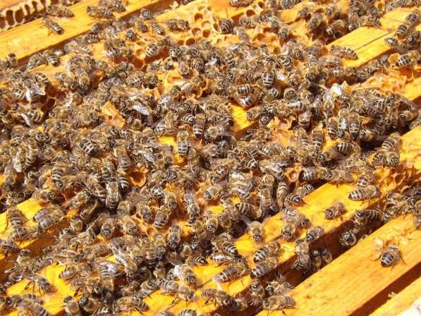 Приму в дар пчёл
