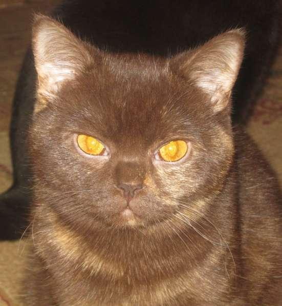 Клубные котята питомника
