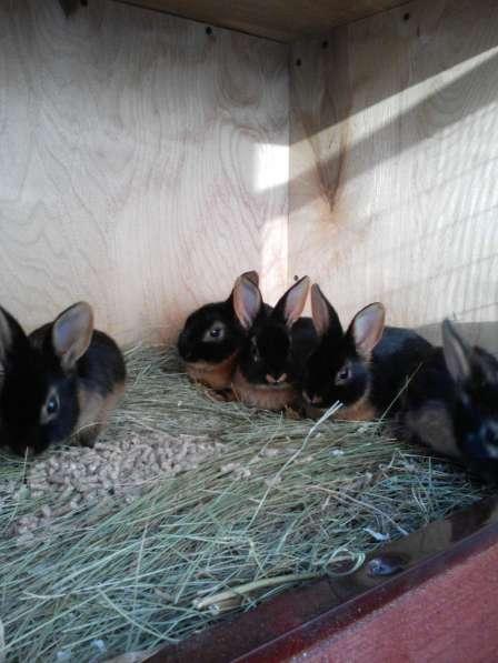 Редкие крольчата
