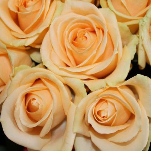 Срез для букетов (розы) в Ростове-на-Дону