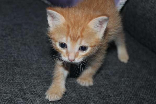 Котята,1.5мес в добрые руки (львёнок, тигренок и плюшка)-