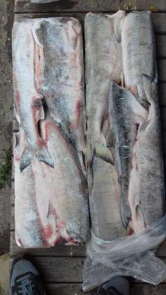 Д-В рыбопродукция