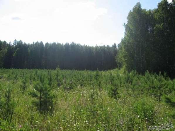 Продаю садовый участок 6 соток на озере Таватуй в Екатеринбурге