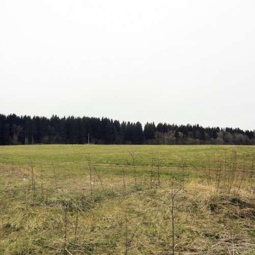 Срочно продам 3,8 гектара в Хомутово!