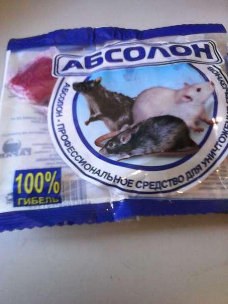 Уничтожение клопов, тараканов, мышей, крыс. Продажа средств в Санкт-Петербурге фото 3