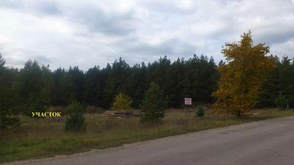 Участок в хвойном лесу под жилую усадьбу (с коммуникациями)