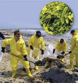 Биодеструктор нефтяного загрязнения БАК-